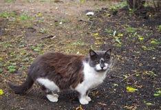 Ein Braun mit weißer Katze geht auf den Park lizenzfreie stockbilder