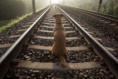 Ein brauner Hund sitzt auf einer Bahnstrecke Lizenzfreie Stockfotografie