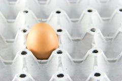 Ein braunes Ei in einer Pappe über Weiß Lizenzfreie Stockfotos