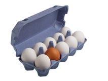 Ein braunes Ei unter weißen Eiern Stockbilder
