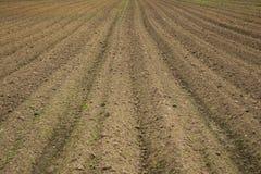 Ein braunes Feld mit gepflogenen Reihen des Schmutzes Lizenzfreie Stockfotografie
