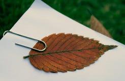 Ein braunes gefallenes Blatt mit einer Papierklammer Lizenzfreie Stockfotos