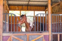 Ein braunes Pferd Stockbild