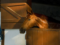 Ein brown-Pferd am Stall Lizenzfreie Stockfotos