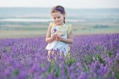 Ein Brunettemädchen in einem Strohhut, der einen Korb mit Lavendel hält Ein Brunettemädchen mit zwei Borten auf einem Lavendelgeb Stockbild