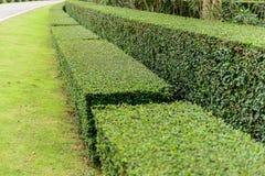 Ein Brunnen gestaltete landschaftlich und manikürte Hecke von Büschen lizenzfreies stockbild