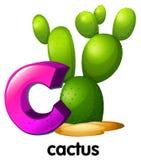 Ein Buchstabe C für Kaktus Stockfotografie