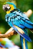 Ein bunter Macaw im wilden Stockfotos