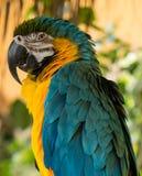 Ein bunter Papagei Stockbild
