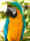 Ein bunter Papagei Lizenzfreie Stockfotografie