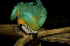 Ein bunter Papagei Stockfoto