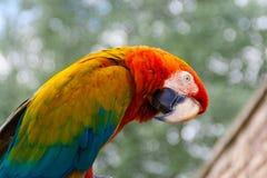 Ein bunter Papagei auf einem pearch stockbild