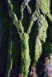Ein buntes grünes Baumstammdetail Lizenzfreies Stockbild