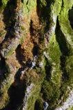Ein buntes grünes Baumstammdetail Lizenzfreie Stockfotografie