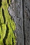 Ein buntes grünes Baumstammdetail Stockfotos