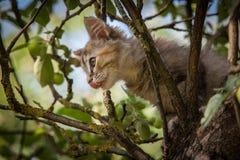 Ein buntes Kätzchen, das im Baum klettert Stockfoto