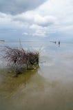 Ein Busch in dem Wadden-Meer Lizenzfreie Stockfotos