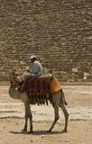 Ein Cammelmitfahrer vor der großen Pyramide lizenzfreie stockfotografie