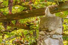 ein charakteristischer Pylonstein und ein Kalk der Weinberge des berühmten Piedmontese Weins Nebbiolo Carema D O C Italien Lizenzfreie Stockfotografie