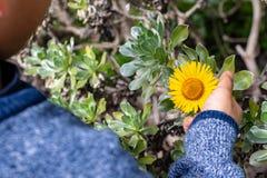 Ein child& x27; s-Hand, welche die Kaktusblume hält lizenzfreie stockfotos