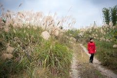 Ein chinesisches Mädchen, das in Miscanthus-Hintergrund geht Lizenzfreies Stockfoto