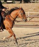 Ein Cowboy, der sein Pferd in einer Arena reitet Stockbild