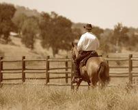 Ein Cowboy, der sein Pferd in einer Wiese reitet. Lizenzfreies Stockbild