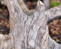 Ein defekter Baum nach einem Sturm in einem Wald während der Herbstsaison lizenzfreie stockfotografie