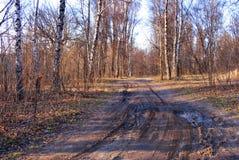 Ein defekter Schotterweg führt durch eine Birkenwaldung am Vorfrühlingsmorgen lizenzfreies stockbild