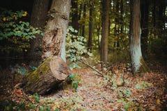 Ein defekter Wald Stockfoto