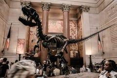 Ein dekoratives Skelett eines Dinosauriers lizenzfreies stockbild