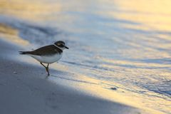 Ein denkender Vogel am Strand Stockfotografie