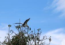 Ein der offenen berechneten Storchvogelstange und geflügeltes an der Spitze des Baums auf blauem Himmel und weißem Wolkenhintergr stockfoto