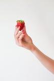 Ein Detail schoss von der Hand einer Frau mit den roten Nägeln, die eine köstliche Erdbeere halten Stockfotografie