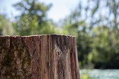 Ein Detail schoss von einem Baumstumpf mit dem Fluss und einem Wald unscharf im Hintergrund Stockfoto