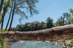 Ein Detail schoss von einer Niederlassung mit dem Fluss und von einem forrest unscharf im Hintergrund Stockfotos