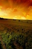 Ein deutscher Weinberg nahe dem rhe Stockbild