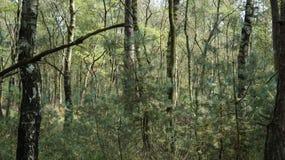 Ein dichter Nationalpark die Niederlande Waldansicht De Hoge Veluwe Lizenzfreie Stockfotografie