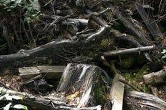Ein dichter Wald des Schwarzweiss-Schutts Lizenzfreies Stockfoto