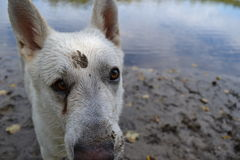 Ein dog'a Leben Stockfotografie
