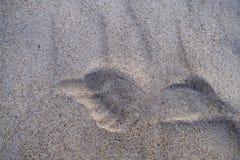 Ein Druck eines Beines auf Sand lizenzfreies stockfoto