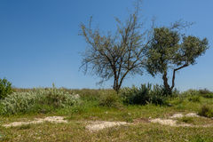 Ein Duo von Bäumen lizenzfreies stockbild