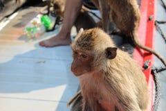 Ein durchdachter Affe sitzt auf einem Boot in Thailand Lizenzfreie Stockbilder