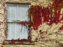 Ein efeubewachsenes Fenster in Irland Stockfotos