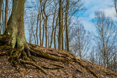Ein ehrfürchtiger Baum auf Parnas-Berg in Tsarskoe Selo, Pushkin, Sa Stockfotos