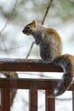 Ein Eichhörnchen gehockt auf einem Plattformgeländer Stockfotografie