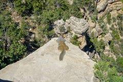Ein Eichhörnchen am Nationalpark des Grand Canyon stockbild