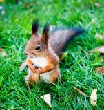 Ein Eichhörnchen, sonniger Tag Stockfotografie