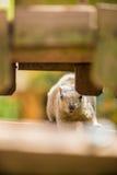 Ein Eichhörnchenblick auf mich Lizenzfreie Stockfotos
