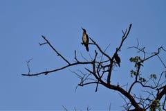 Ein eifriger Vogel, bereiten vor, um zu fliegen Lizenzfreie Stockfotografie